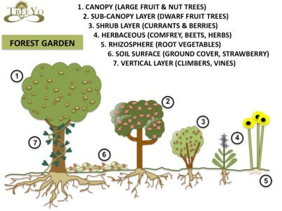 Forest Garden schematic