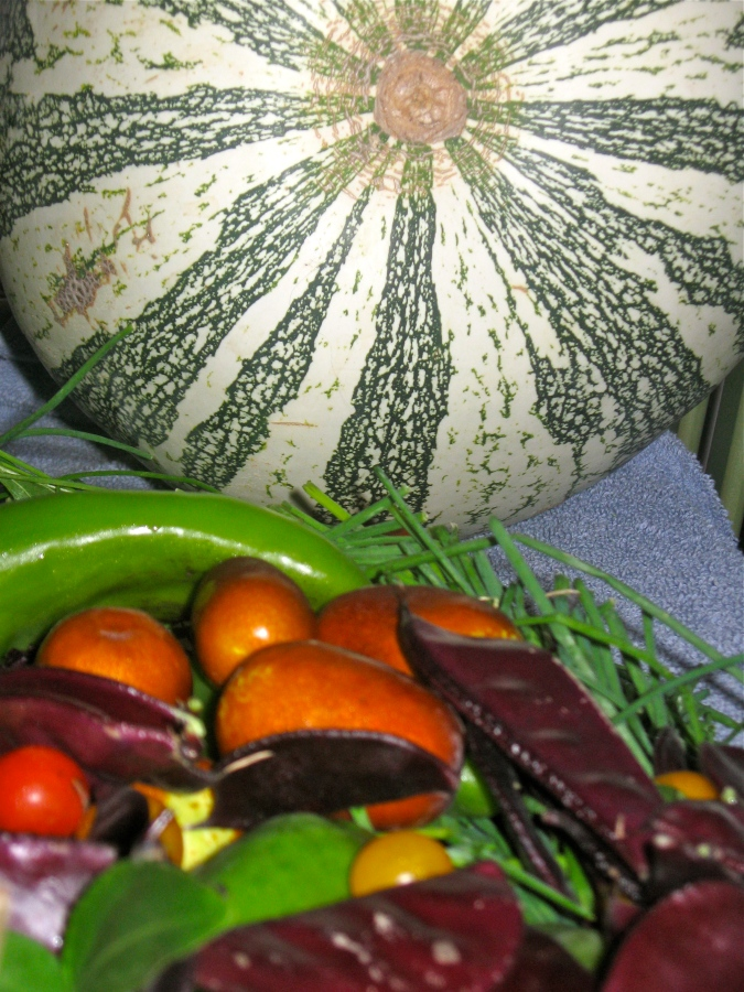 Permaculture harvest