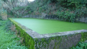 duckweed on water tank