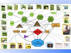 Perma-aquaculture.041