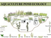 Perma-aquaculture.042