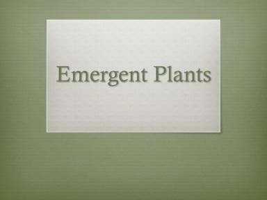 Emergent Plants