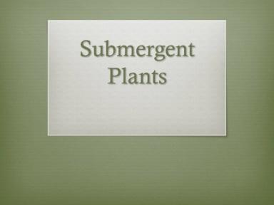 submergent plants