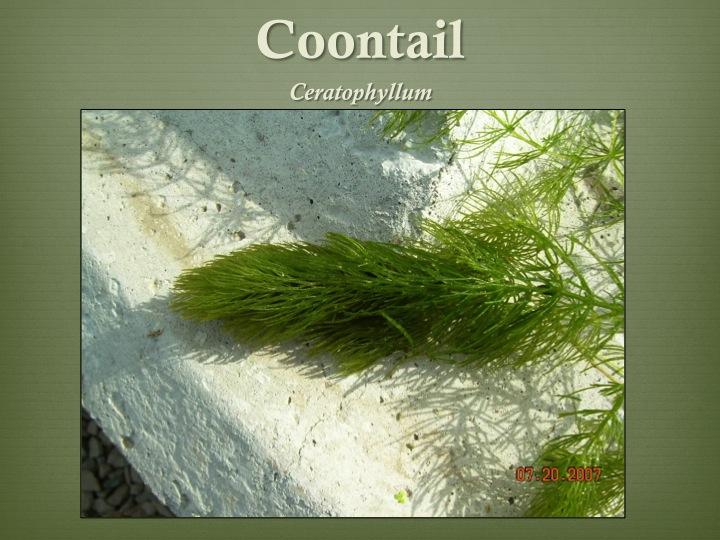 Floating Aquatic Plants Names