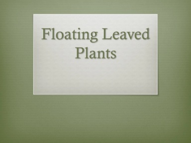 floating leaved plants