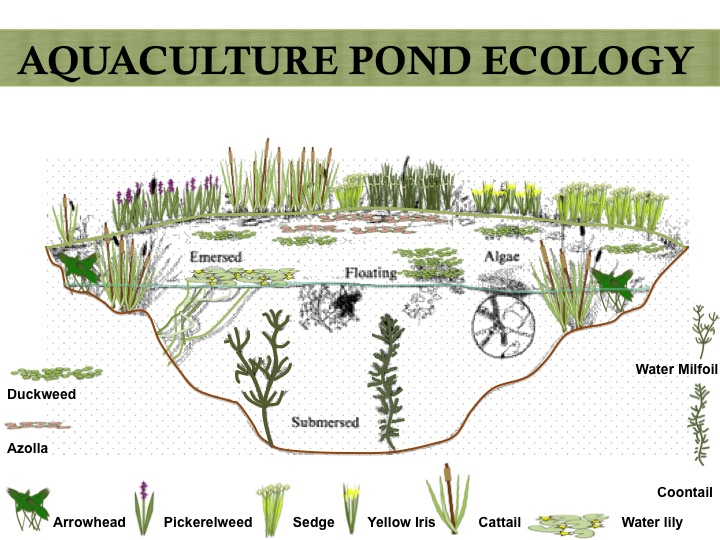 Aquatic Plant Ecology ...