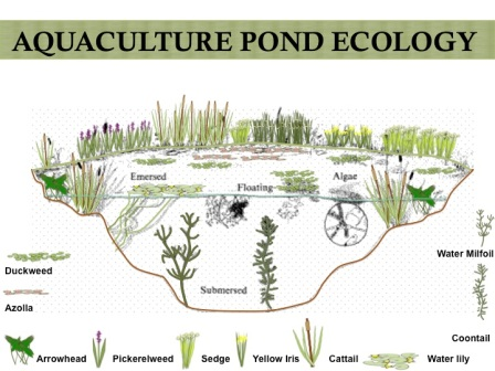 aquatic pond ecology