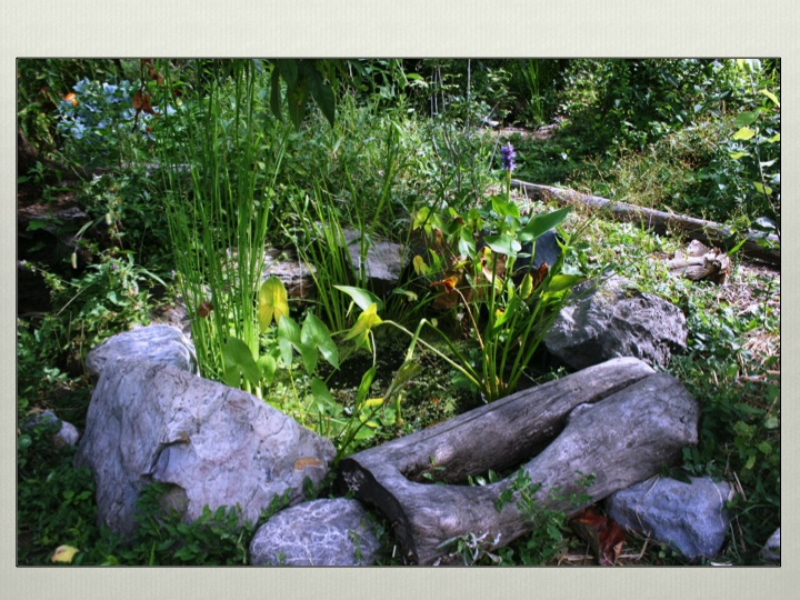 Pond Design Courses