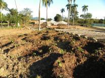 Banana Circles. Jamaica de Dios, Dominican Republic, 2012