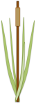 cattail: filtration through habitat creation