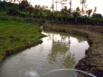 pond with swale at jamaca de dios dominican republic