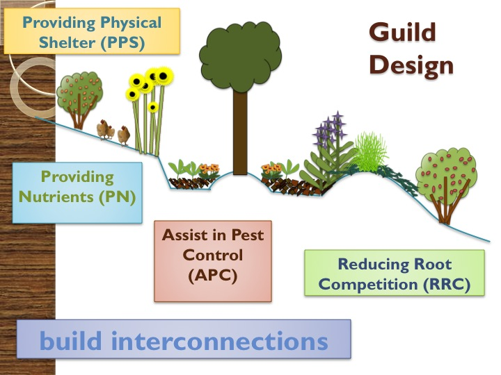Treeyo permaculture definition a permaculture design for Permaculture exemple