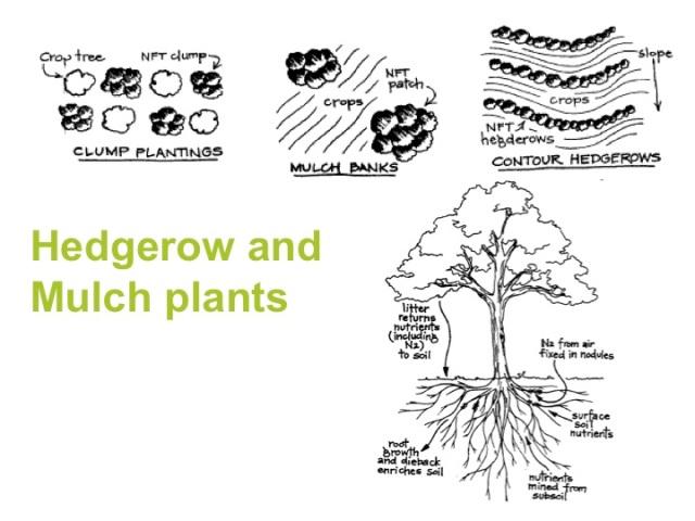 Soil building techniques part 4 a permaculture design for 4 parts of soil