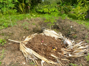 Papaya Sponge Permaculture with household waste being cycled
