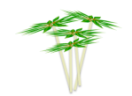 cassava section