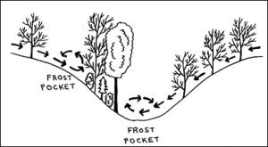 frost pocket