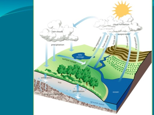 Standard Hydrological Cycle Graph
