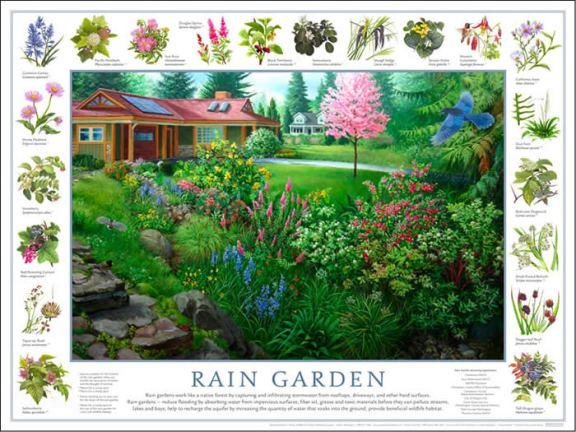 from http://www.goodnaturepublishing.com/raingarden.htm