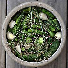 pickle ferment