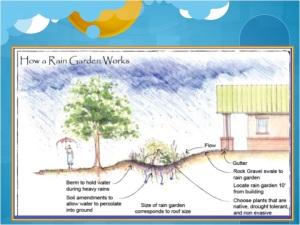Rain Garden Schematic