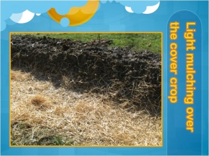 cover crop mulch