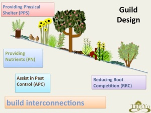 permaculture guild