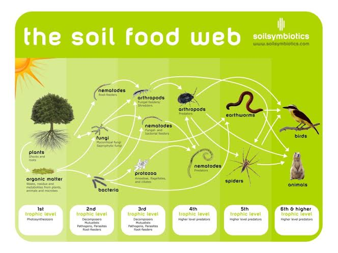 soil agriculture and food chain How big data will revolutionize the global food chain innovations such as precision agriculture, supply-chain to the needs of their soil.