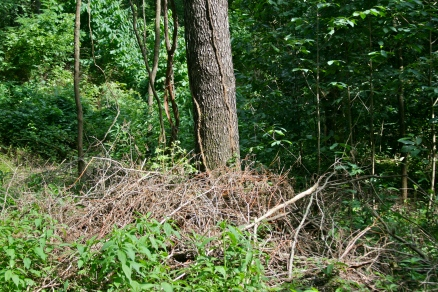 Wildlife brush pile