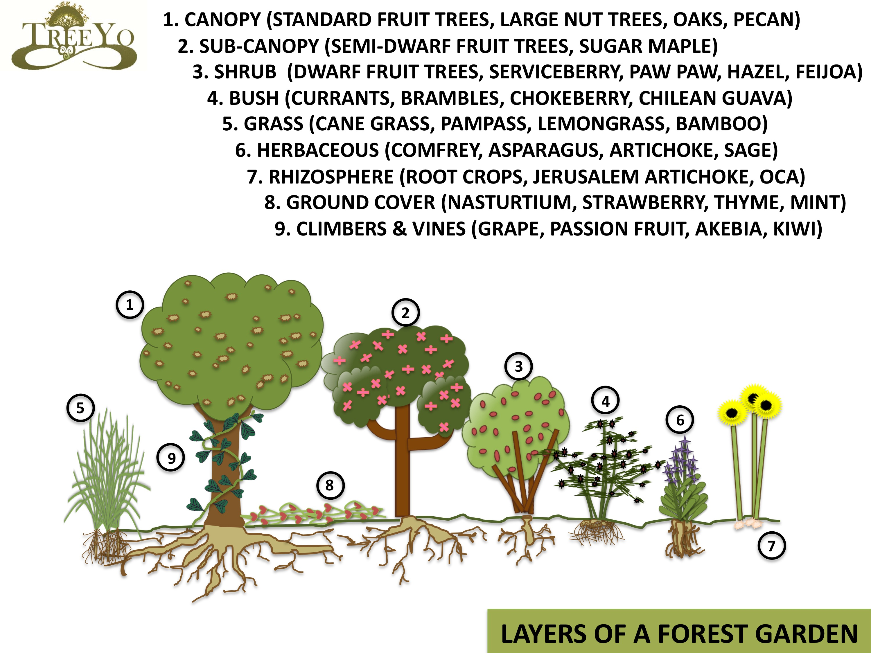 Food forests are often associated with a seven layer system coined by Robert Hart some years ago. In my observations over the years I feel like two more ...  sc 1 st  A Permaculture Design Course Handbook - WordPress.com & Food Forests or Forest Gardens | A Permaculture Design Course Handbook