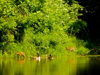 Habitat for wildlife created by trees and shrubs near water