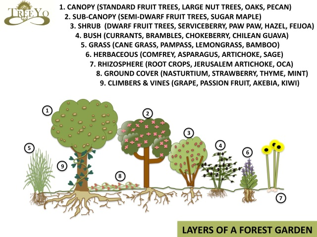Forest Garden design, a great way to incorporate design and trees
