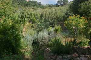 cannel and edges of garden