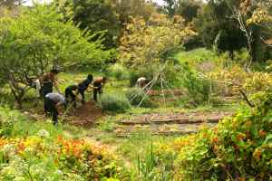 working the edges of the serpent garden to add in new layers of the food forest