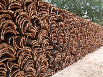 The Cork Harvest