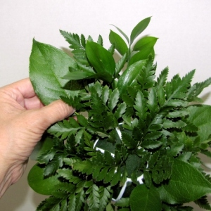 Salal Leaf Arrangement