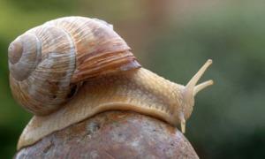 snail460x