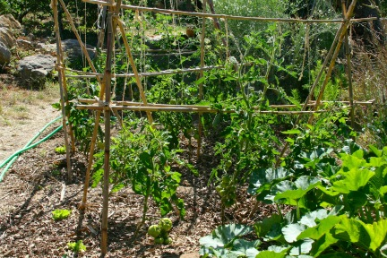 Sunken bed at Terra Alta with Tomatoes, Summer 2015