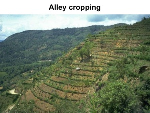 Unique context of contour hedgerows creating alleys for grazing and cropping in the tropics