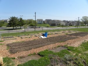 Market garden with raised beds