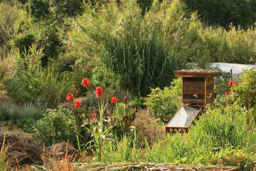Dehydrator slotted into Permaculture Food Forest landscape, coastal Portugal