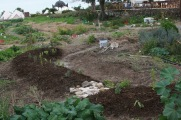 Mini Swale planted, composted and about to receive mulch, Suryalila, Spain, 2016