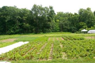 Dark Wood Farm, CSA and local Foods Farm at Treasure lake, Petersburg, Kentucky