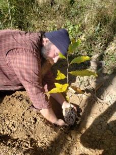 Tree Planting Chestnut, Treasure Lake, KY