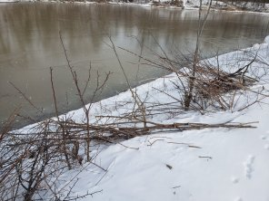 remnants of cut and carry, January, 2019, Treasure Lake